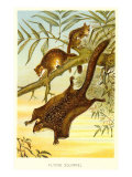 Flying Squirrels Print