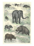 Variety of Mammals Art