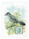 Catbird and Egg Affiches