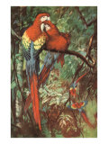 Macaws Nuzzling in Jungle Art