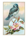 Bluebird on Rose Bush Reproduction procédé giclée
