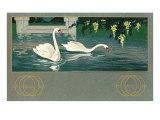 Swans on the Lake Prints