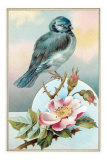 Bluebird on Rose Bush Prints