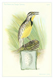 Meadowlark and Egg Poster