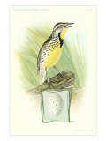 Meadowlark and Egg Affiches