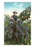 California Vineyard Prints
