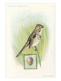 Song Sparrow with Egg Affiche