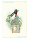 Rose-Breasted Grosbeak and Egg Posters