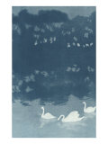 Swans in Dusk Prints