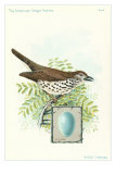 Wood Thrush and Egg Kunstdrucke