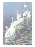 Swans in Line Posters