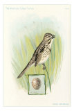 Song Sparrow with Egg Poster