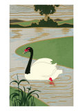 Black-Necked Swan on River Art