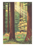 Redwoods Scene with People and Deer Posters