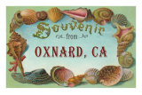 Shell Border Souvenir from Oxnard, California Prints