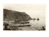 Catalina Harbor Print