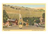 Weinberge Sonoma County, Kalifornien Poster
