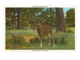 Deer at Yosemite Art