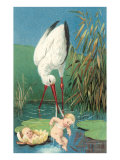 Stork in Marsh with Babies Posters