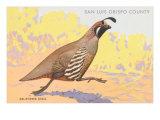 California Quail, San Luis Obispo County Posters