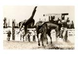 Calgary Stampede Rodeo Art