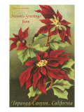 Vintage Poinsettias Art