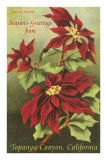 Vintage Poinsettias Prints