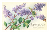 Lilacs, Topanga, California Prints