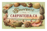 Shell Border Souvenir from Carpinteria Prints