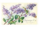 Lilacs, Topanga, California Posters