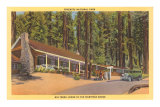 Big Trees Lodge, Mariposa Grove, Yosemite Poster