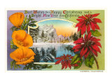Season's Greetings, Cambria, California, Poppies, Poinsettias Prints