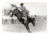 Bucking Bronco Photo Posters