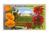 California Christmas Poppies, Poinsettias and Orange Groves Prints