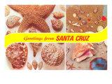 Sea Shell Greetings from Santa Cruz Poster