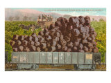 Carload of Grapes from San Luis Obispo County Art