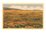 Poppies in San Luis Obispo Posters