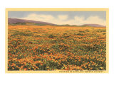 Poppies in San Luis Obispo Posters