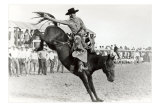 Bucking Bronco Photo Prints