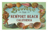 Shell Border Souvenir from Newport Beach, California Posters