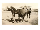Bull Throwing Rodeo Rider Stampe