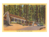 Big Trees Lodge, Mariposa Grove, Yosemite Prints