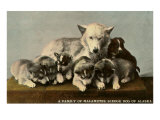 Malamute Family Prints