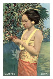 Javanese Girl Picking Coffee Prints
