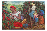 Coffee Harvest Print