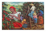 Coffee Harvest Prints