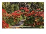 Bellingrath Gardens, Mobile, Alabama Print