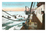 Dog Teams, Nome, Alaska Prints
