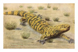 Gila Monster Posters