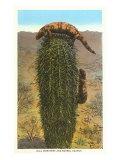Monstres de Gila sur un cactus tonneau Posters